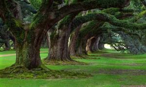 drzewa_mini