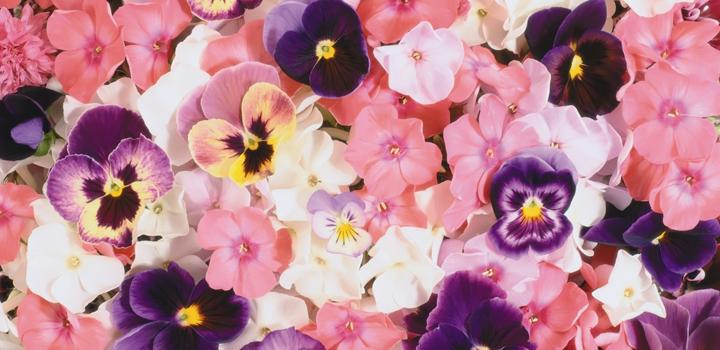 jadalne-kwiaty1