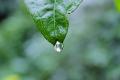 3 zastosowania wody deszczowej