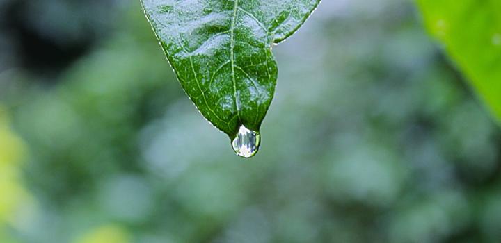 fot.: Shyamanta Baruah, unsplash.com