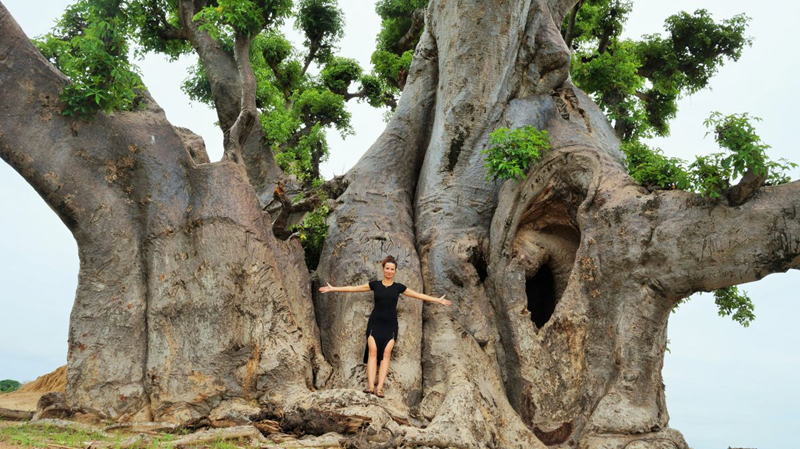 Baobab-Nianing1 (Copy)
